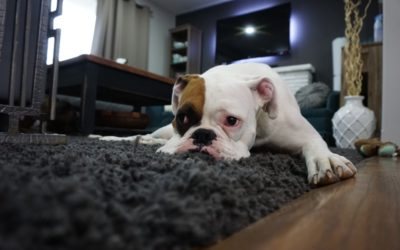 Pets and Your Carpets – Tips on How to Keep Them Clean